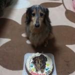 ワンちゃんの似顔絵ケーキ